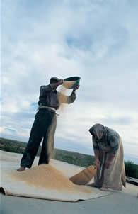 Hah (Anıtlı) Köyünde Buğday Eleyen Süryaniler